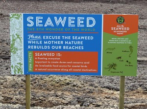 SeaWeed the eighth wonder of the world
